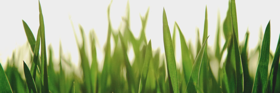 We keep your lawn healthy and green.
